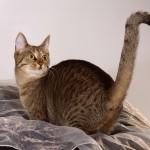 Katze3INternet