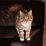 Katze4Internet