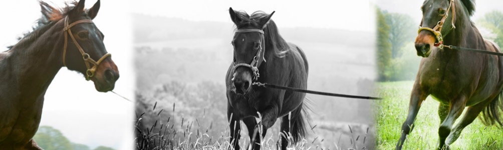Pferdebilder1Sliderinternet